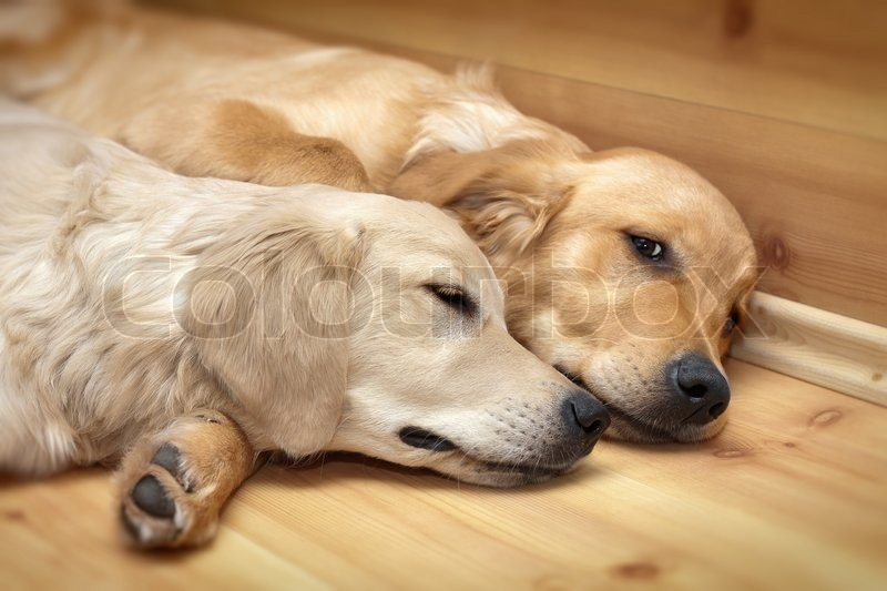 View of two dogs lying