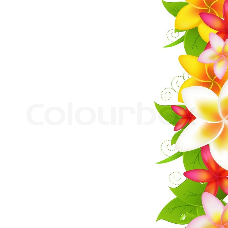 tropical flowers frangipani isolated on white background vector rh colourbox com Butterflies Border Clip Art Hummingbirds Butterflies Border Clip Art Hummingbirds
