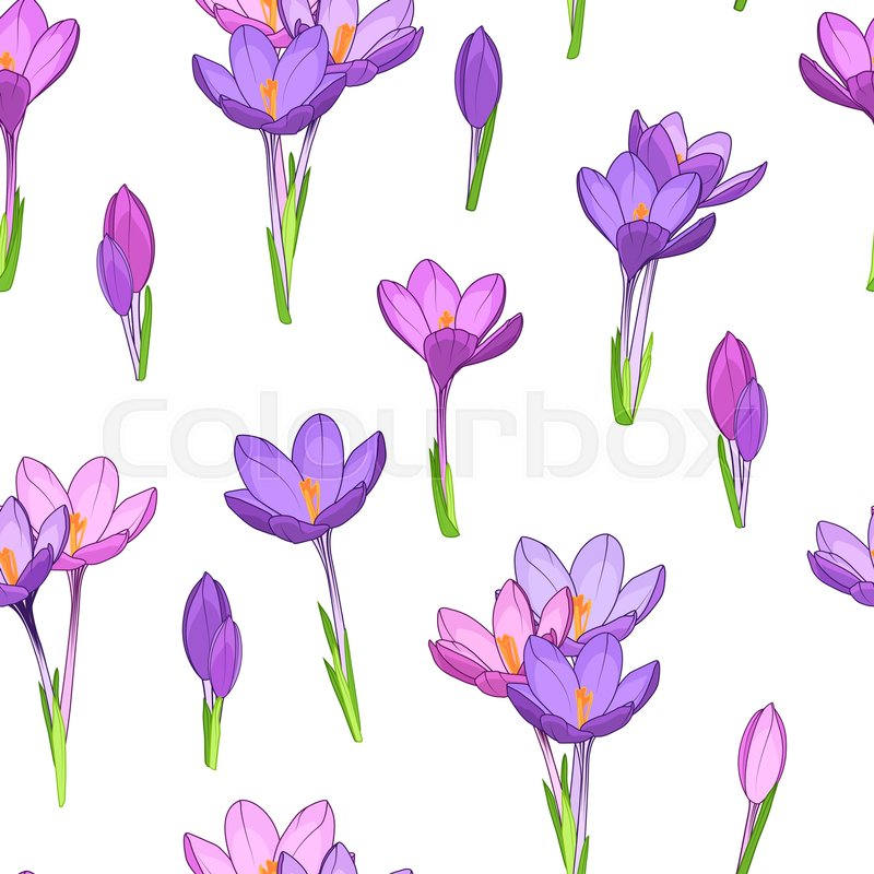 Crocus saffron purple violet spring flowers seamless pattern simple crocus saffron purple violet spring flowers seamless pattern simple small flowers clean drawing on white background march april blooming forest field mightylinksfo