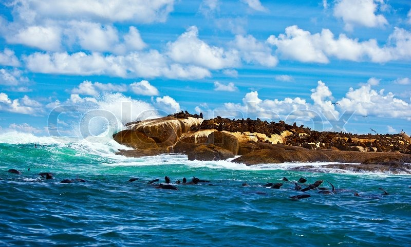 South african seals wild colony in atlantic ocean beautiful south african seals wild colony in atlantic ocean beautiful seascape with animals sea life of african continent eco tourism adventure travel sciox Choice Image