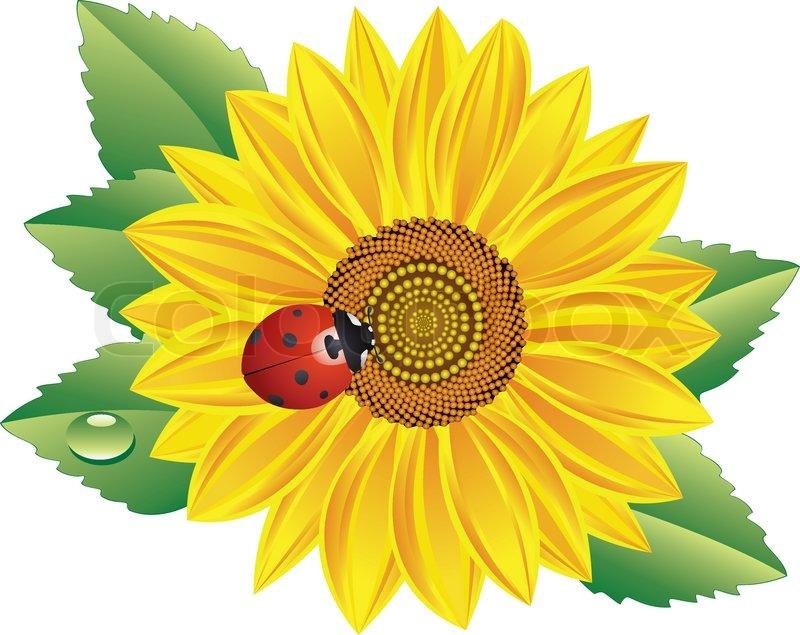 ladybug images clip art