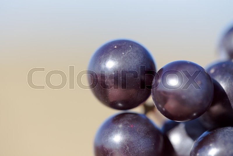 Stock Bild von 'background, labrusca, vitis'