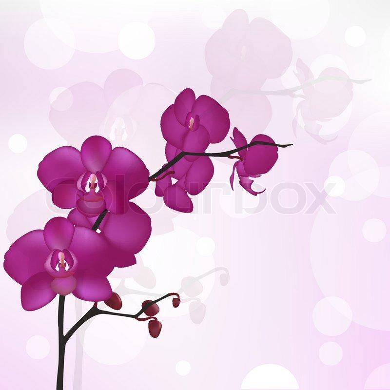 Purple Orchid Branch, Vector Illustration   Stock Vector ...