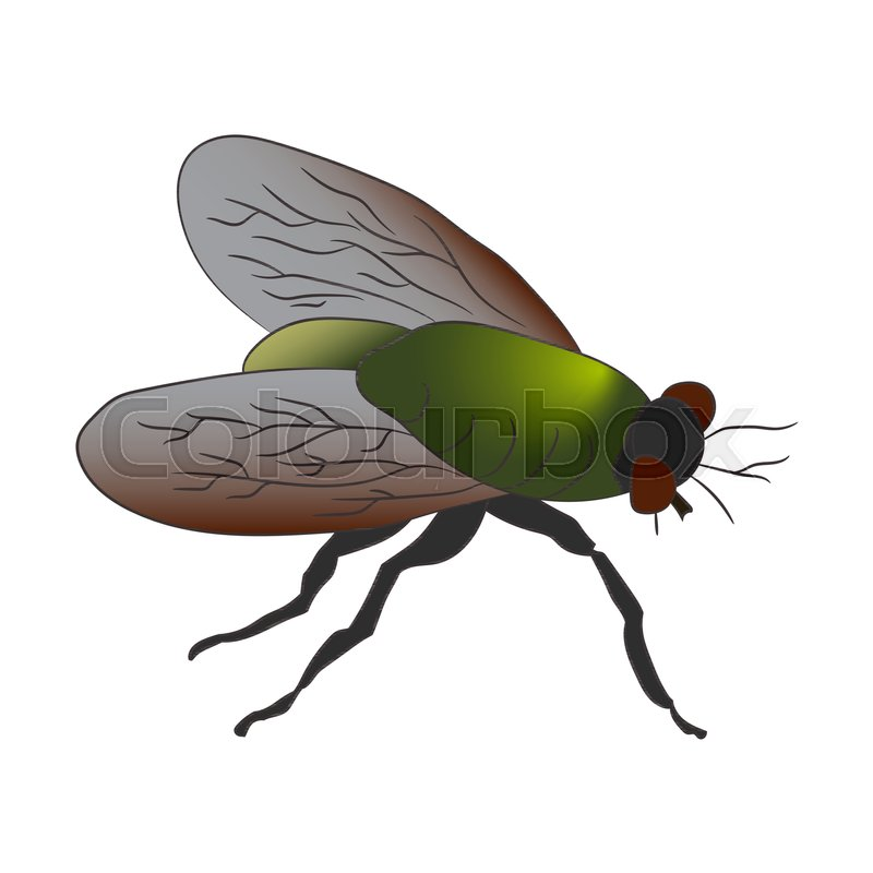 Colorful housefly. Musca Domestica. Vector illustration. Drawing by ...