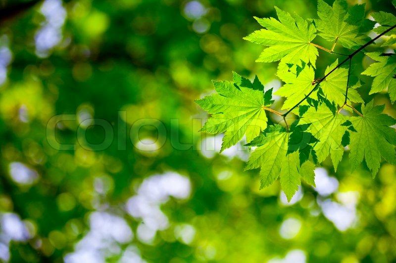 Green leaves background for environment design | Stock ...