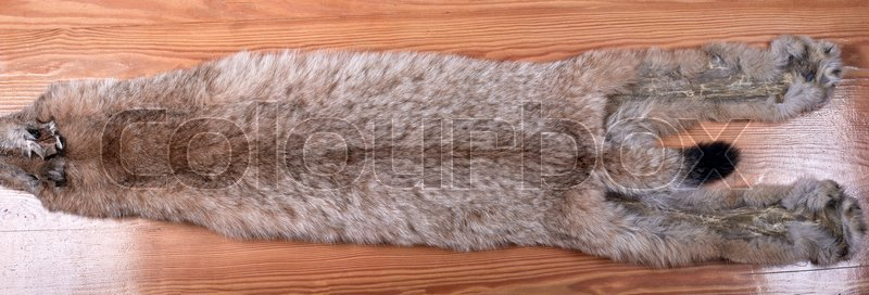 Fur skins of Siberian lynx on wooden background. Not dressed. Average size, stock photo