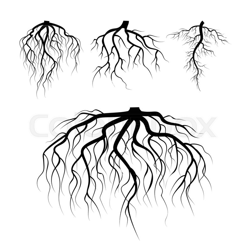 Sunflower Plant Roots Stem Illustration Stock Vector Manual Guide