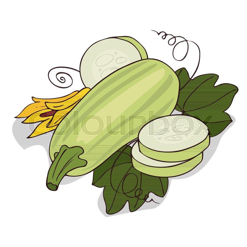 isolate courgette or zucchini on white background close up clipart rh colourbox com zucchini bread clip art zucchini bread clip art
