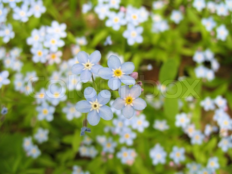 buy stock photos of flowers  colourbox, Natural flower