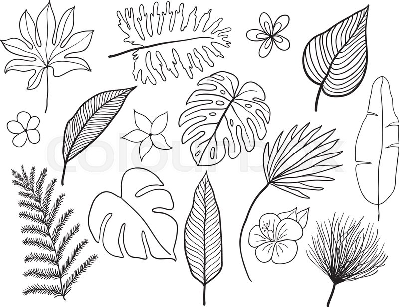 Hand Drawn Tropical Leaves Silhouette Stock Vector Colourbox Live how to draw vector tropical leaves and flowers directly in adobe illustrator + giveaway winner. hand drawn tropical leaves silhouette