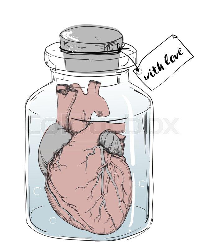 Anatomie, blut, mischung | Vektorgrafik | Colourbox
