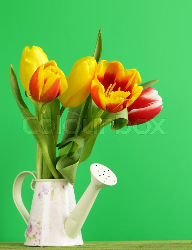 Spring flowers tulips for the easter holiday stock photo colourbox spring flowers tulips for the easter holiday stock photo mightylinksfo Image collections
