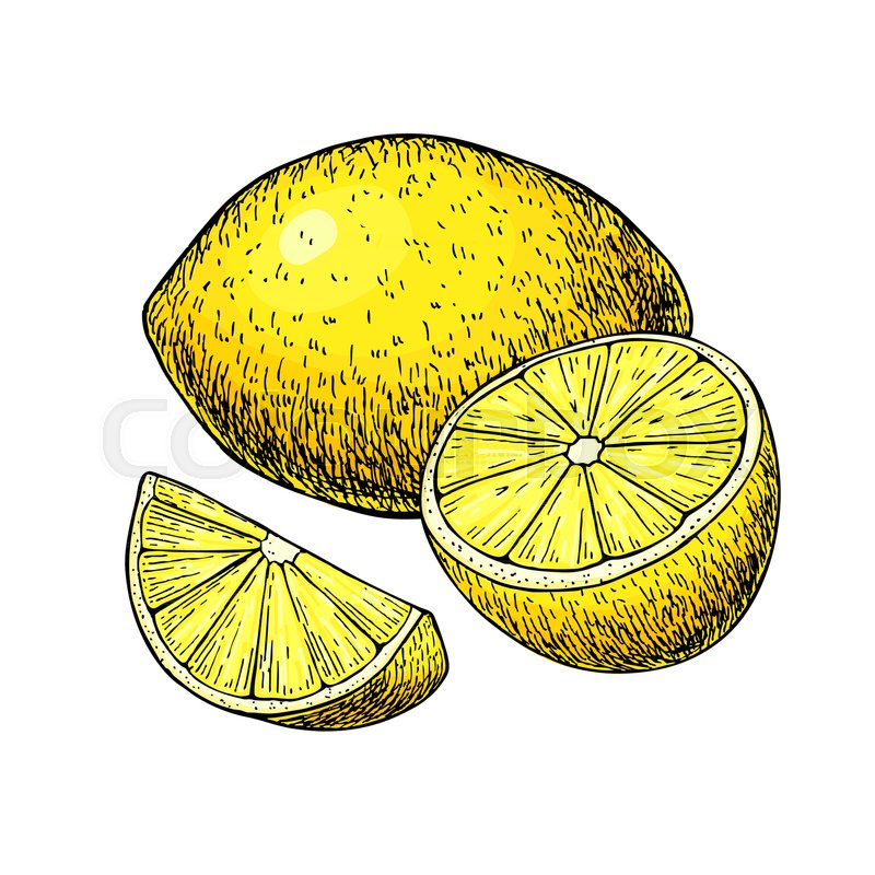 Pictures Of Lemons To Draw