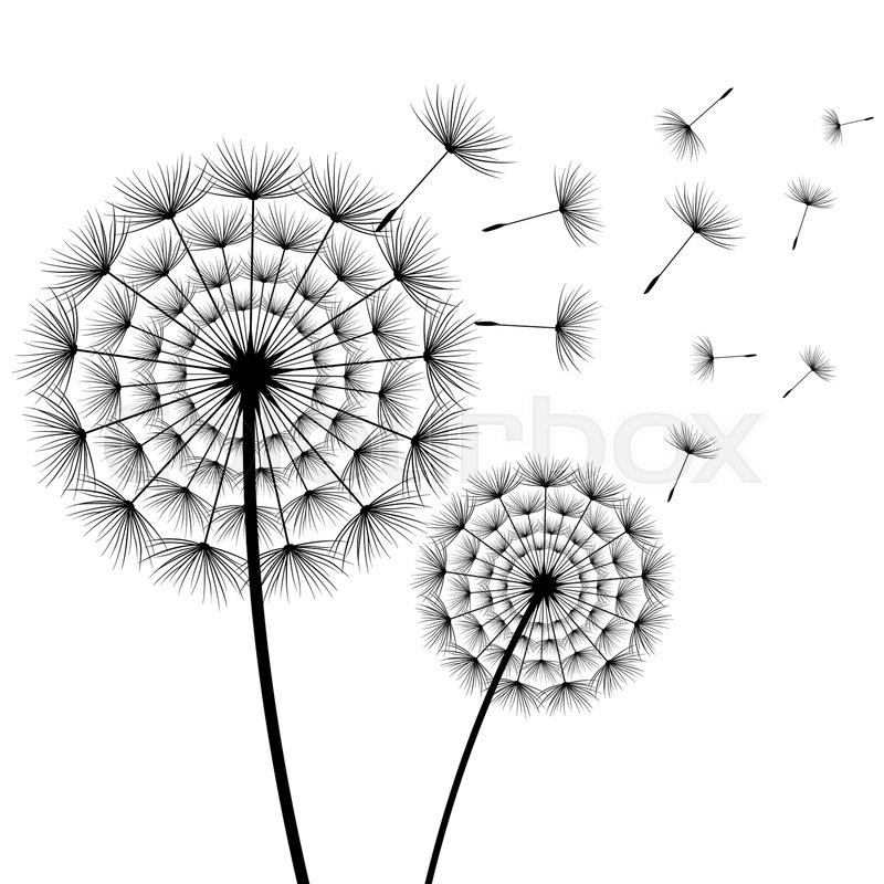 Beautiful Stylish Nature White Background With Two Stylized Black Dandelions Blowing Isolated Floral Trendy Wallpaper Summer Spring Flowers And