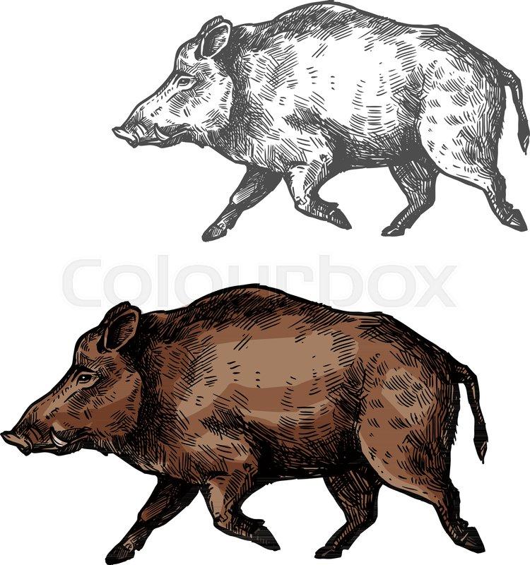 Boar Wild Animal Vector Sketch Icon Wild Aper Swine Or Pig Hog Side