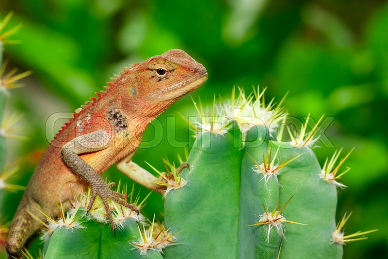 Image of a chameleon on nature background. Reptile. Animal, stock photo