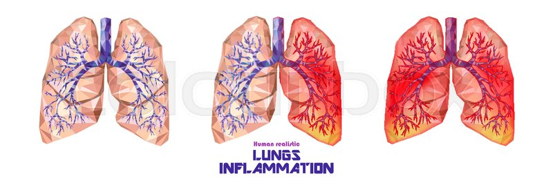 Human Lungs And Trachea Set In Low Stock Vector Colourbox