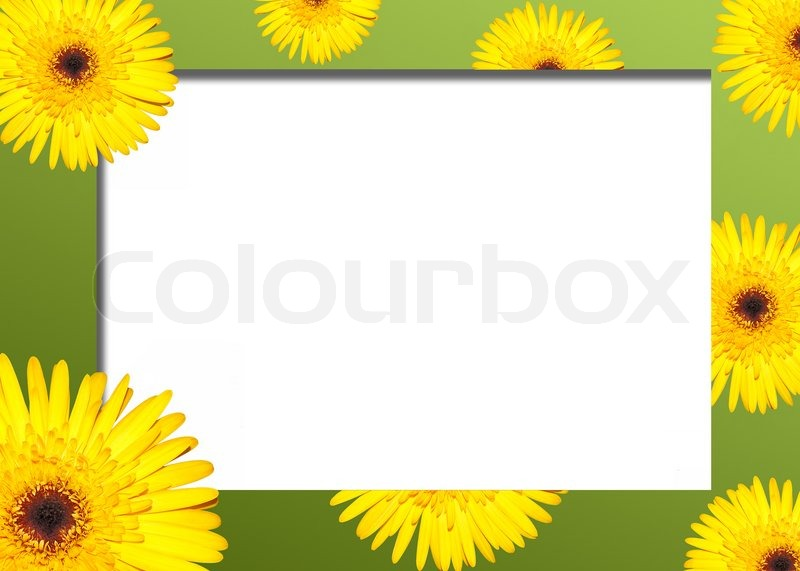 yellow flower on a green border stock photo colourbox