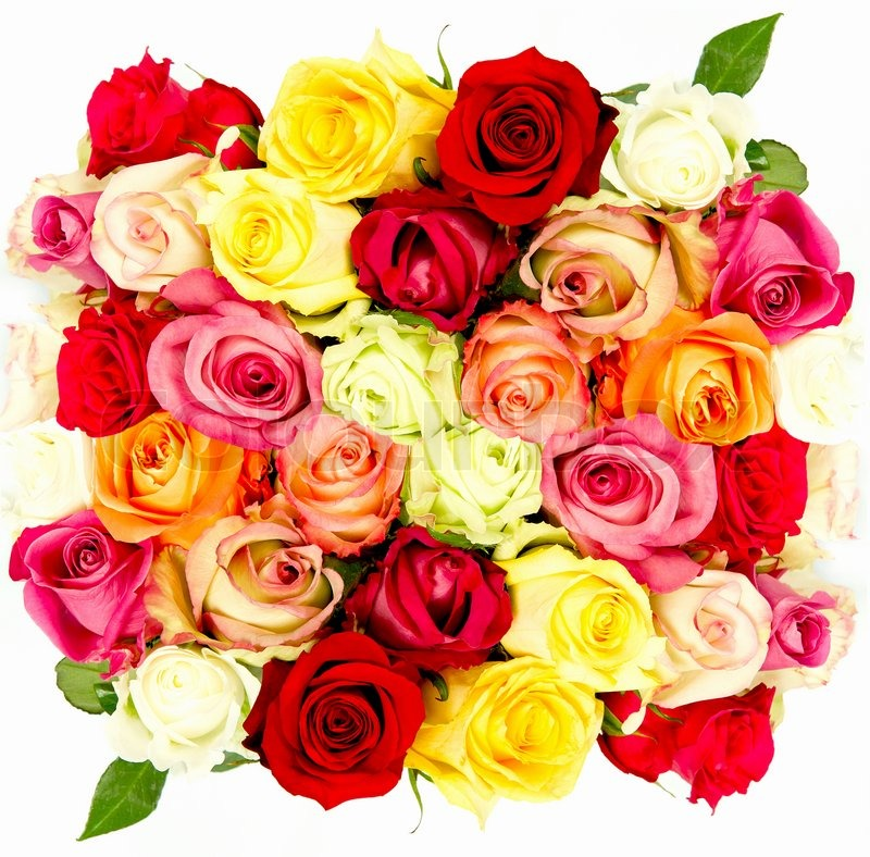 Colorful roses, beautiful flower bouquet on white background | Stock ...
