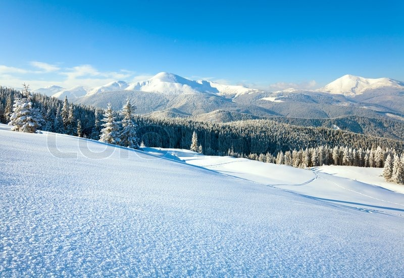 Stock image of 'Winter rime and snow covered fir trees on mountainside Carpathian Mountains, Ukraine'