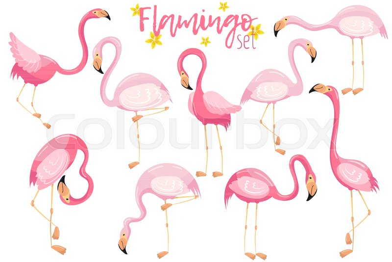 Beautiful elegant pink flamingos set, exotic tropical birds vector Illustrations on a white background, vector