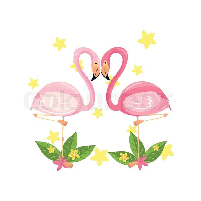 Pink flamingo couple, love, family concept, exotic tropical birds vector Illustration isolated on a white background, vector