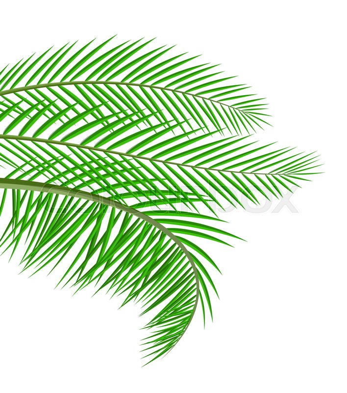 Tropical Green Leaves Jungle Leaves Stock Vector Colourbox View top rated tropical green leaves recipes with ratings and reviews. tropical green leaves jungle leaves