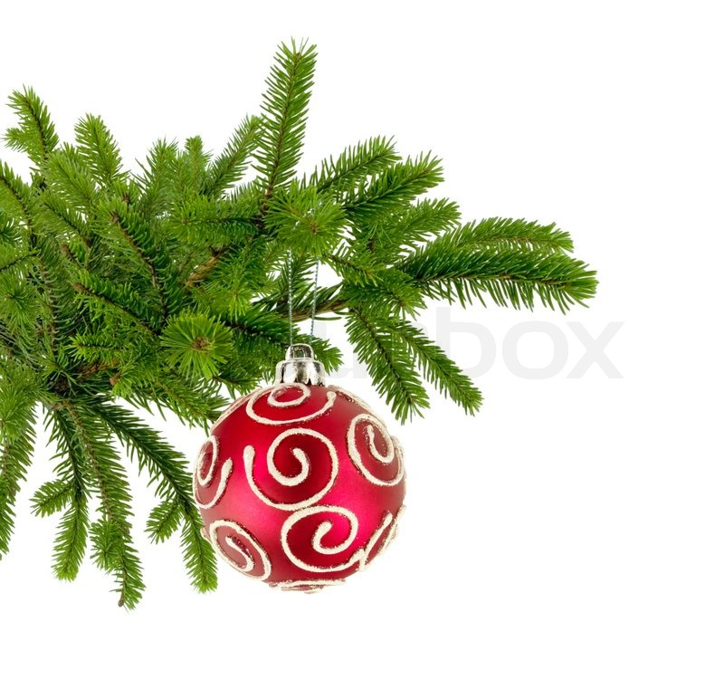christmas tree branch with red decorate ball isolated on white stock photo colourbox