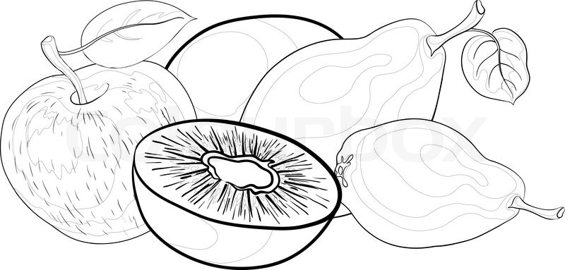 Contour Line Drawing Of Fruit : Still life food fruits contours on a white background