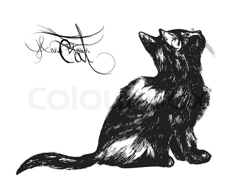 Warrior Cats Grayfur