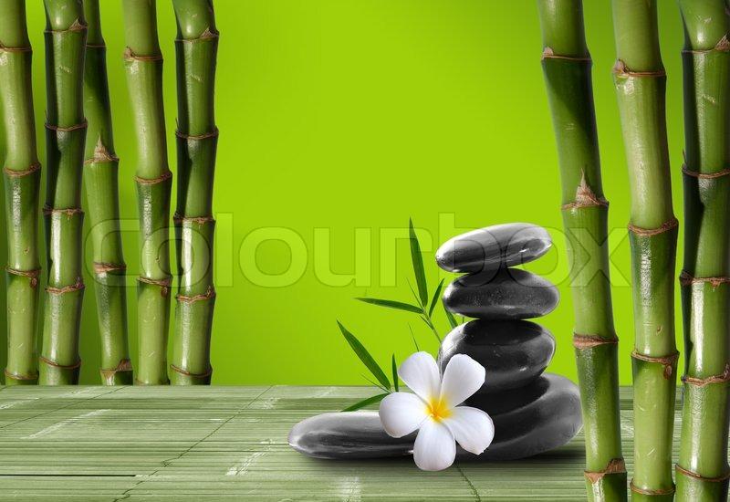 Feine Bild Der Verschiedenen Bambus Natur Hintergrund Stockfoto