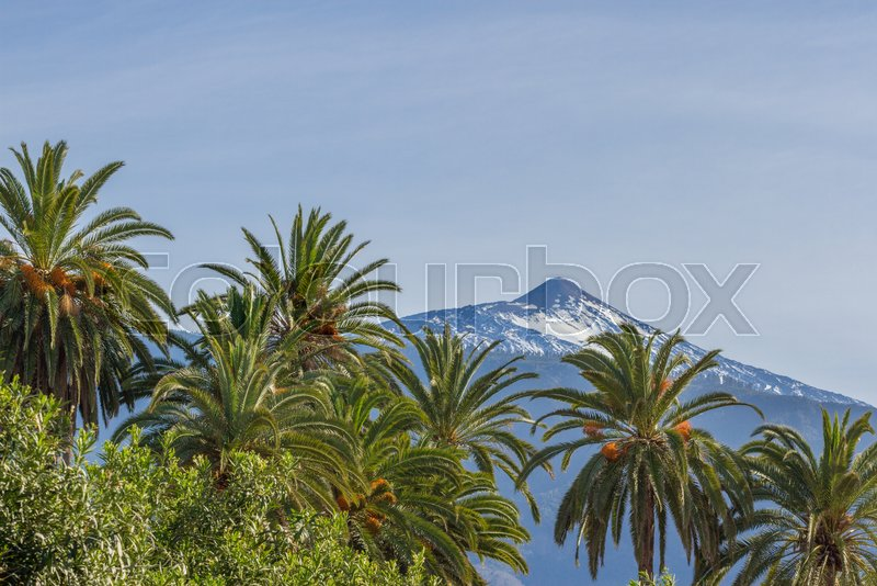 Horizontal landscape image of a snow capped mountain with a palm tree in the foreground. Date palm, Spain, stock photo