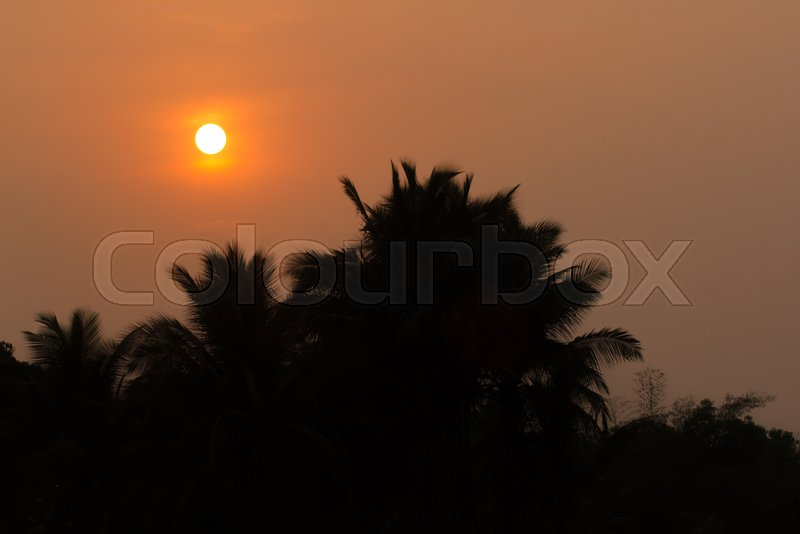 Tropical beach summer background with palm trees silhouette at sunset. Sunset in India. Coconut palm tree, stock photo