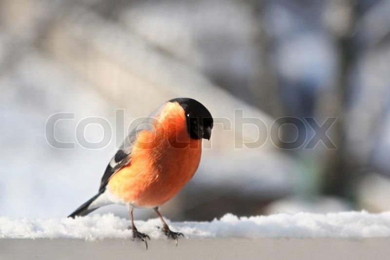 Stock foto af fugle skov naturlandskab