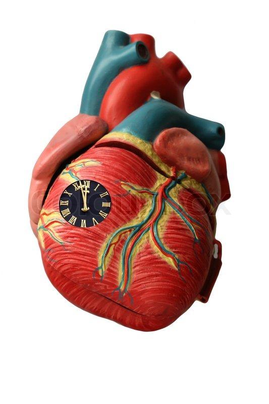 Heart, man, medicine, healthcare, artery, vein health, muscle, life ...