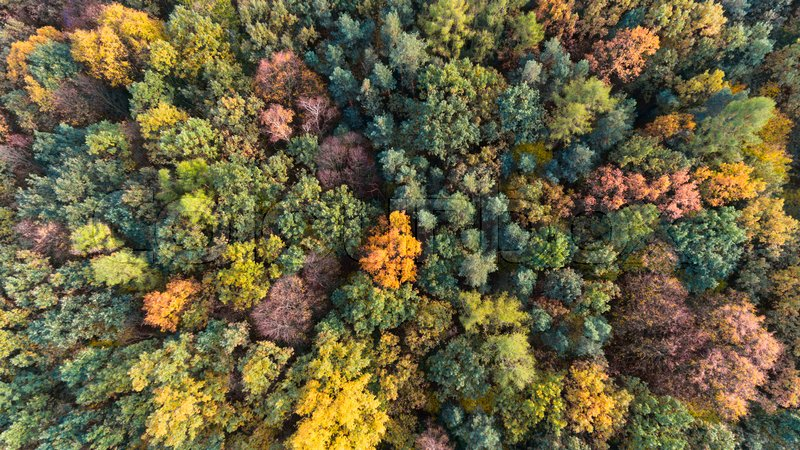 Autumn forest aerial drone view, stock photo