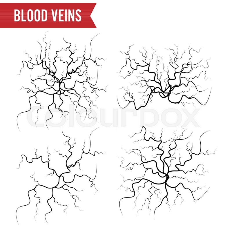 Human Blood Veins Vector Blood Arteries Isolated On White Set Of