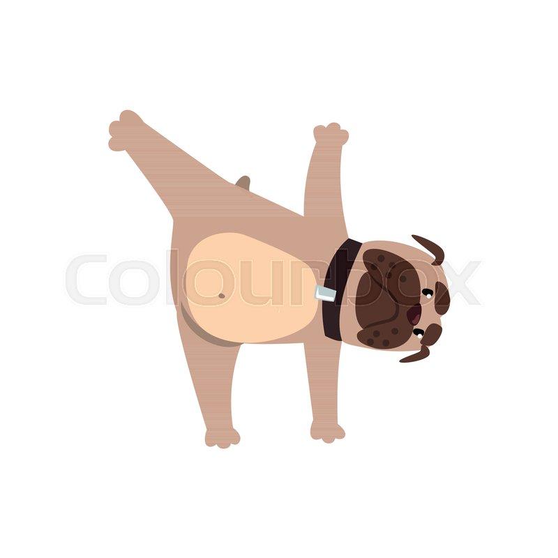French Bulldog In Yoga Pose Funny Dog Stock Vector Colourbox