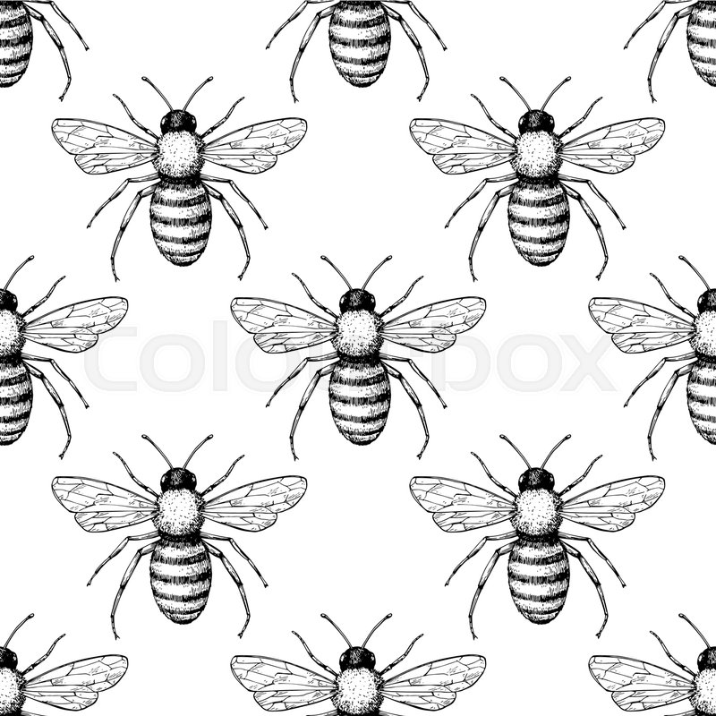 Bee Vector Seamless Pattern Hand Drawn Insect Background Engraved Awesome Bee Pattern