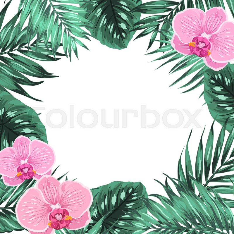 Exotic Tropical Jungle Rainforest Bright Green Palm Tree Pink Orchid Flowers And Monstera