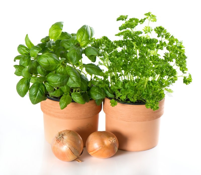 Kitchen Herbs: Kitchen Herbs Basil And Parsley In Pots With Onion On