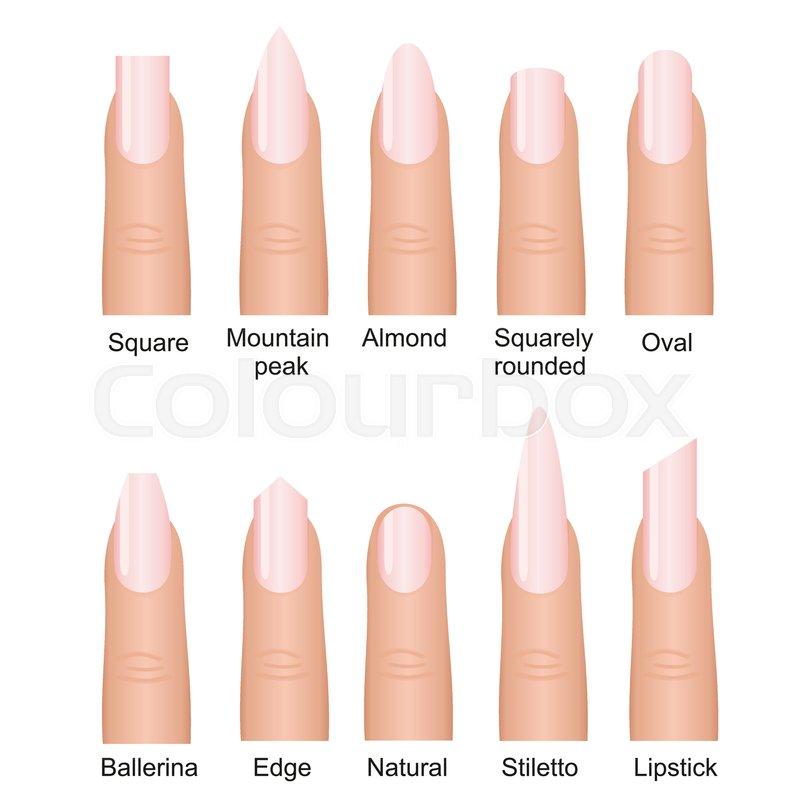 Vector illustration set of different nails shape tipes. Manicure ...