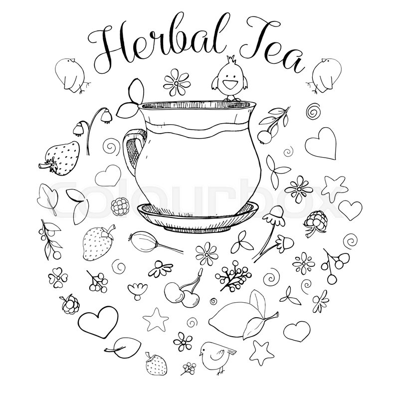 hand drawn a cup different herbs stock vector colourbox hand drawn a cup different herbs
