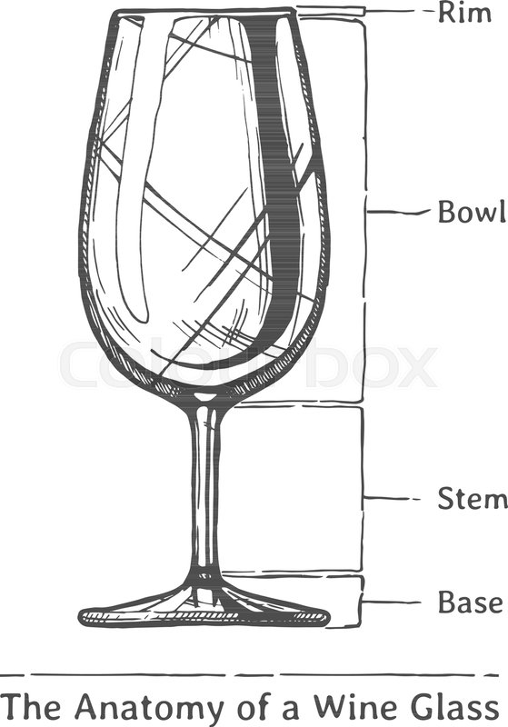The Anatomy Of A Wine Glass Rim Stock Vector Colourbox