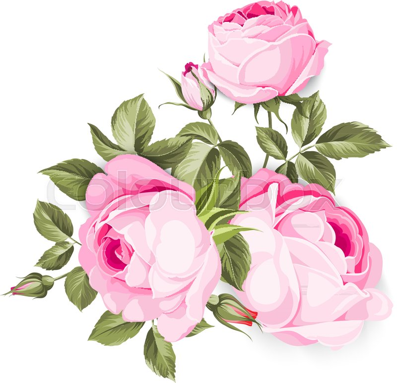 The Blooming Rose with couple of small flowers. Botanical vector ...