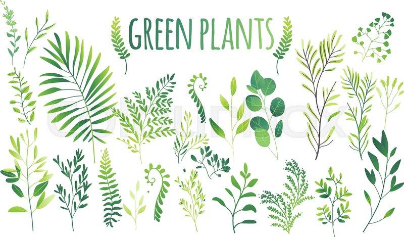 Vector cartoon abstract green plants     | Stock vector