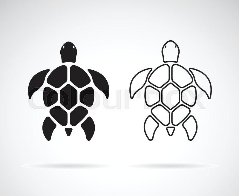 345084593 Vector of turtle design on a white ... | Stock vector | Colourbox