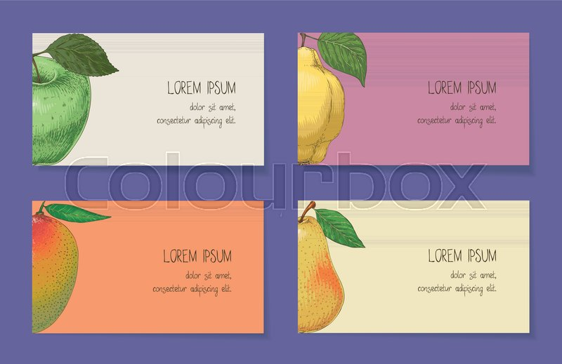 Fruit business cards template collection on a violet background stock vector of fruit business cards template collection on a violet background apple reheart Choice Image