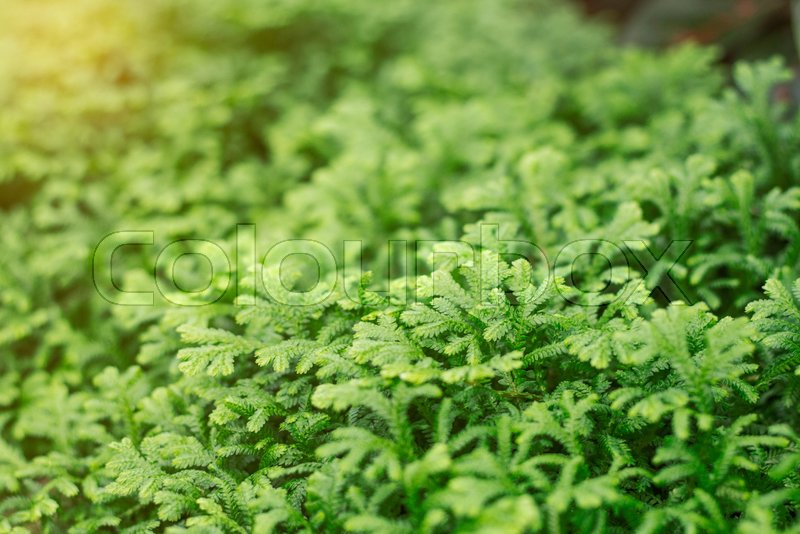 ferns with green nature in rainy season stock photo colourbox
