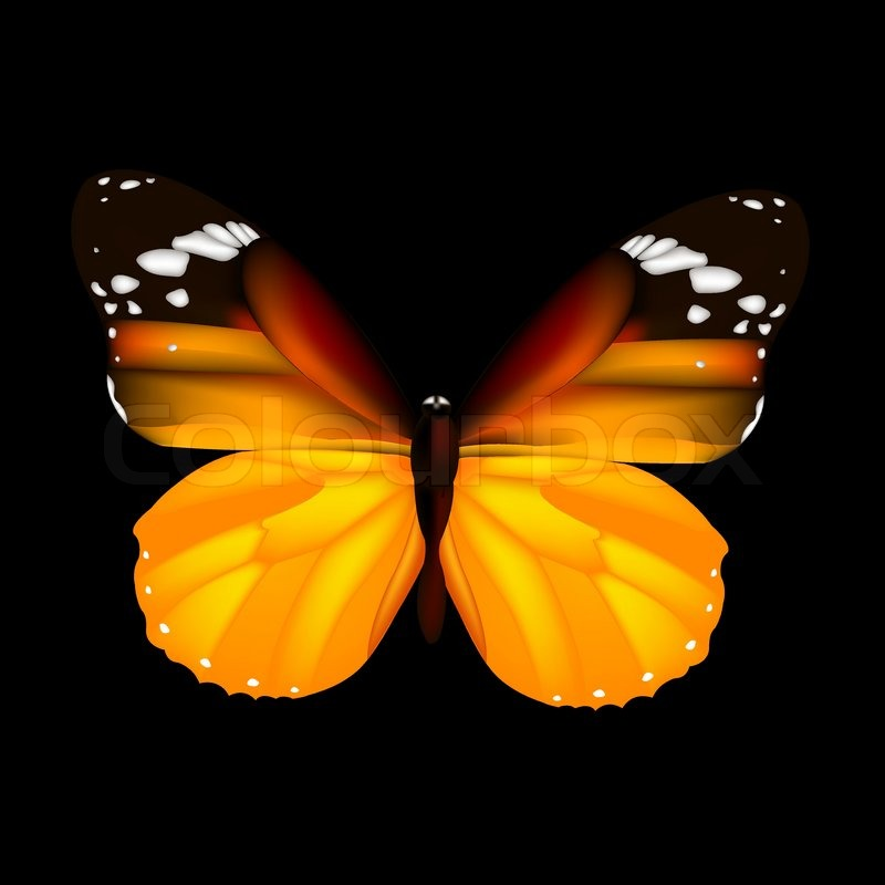 Butterfly Isolated On Black Stock Vector Colourbox